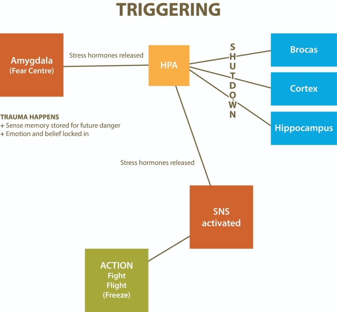 Triggering Diagram